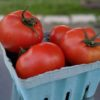 home grown red slicer tomatoes in quart container